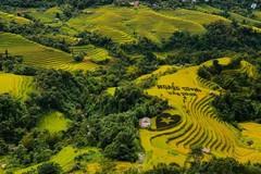 Vào mùa cơm mới ở Hà Giang
