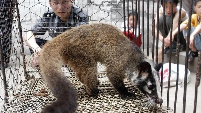 Các trại nuôi động vật hoang dã ở miền Nam Trung Quốc có thể là tâm điểm trong giai đoạn hai của cuộc điều tra. (Nguồn: AFP)