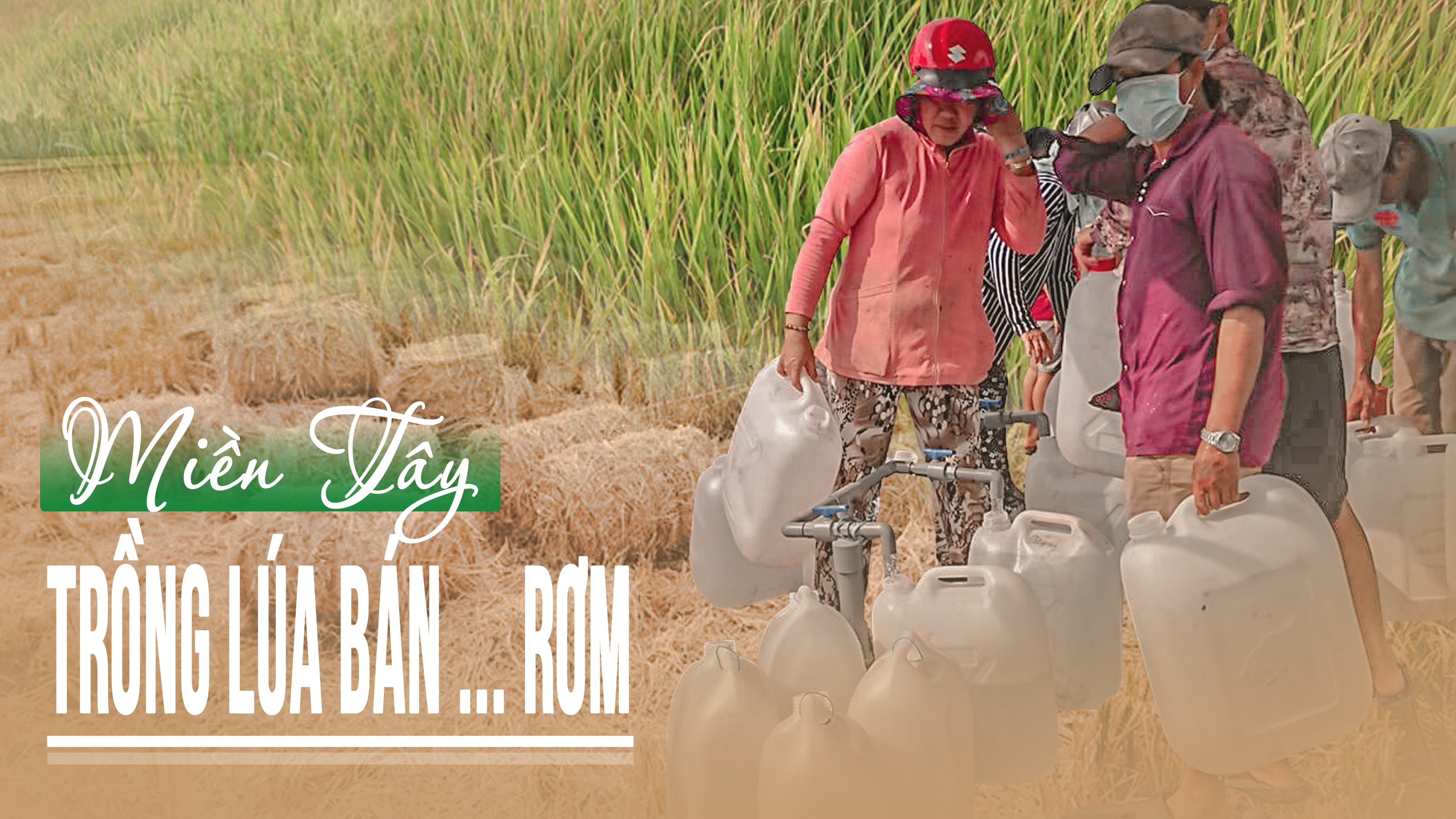 Miền Tây trồng lúa bán… rơm