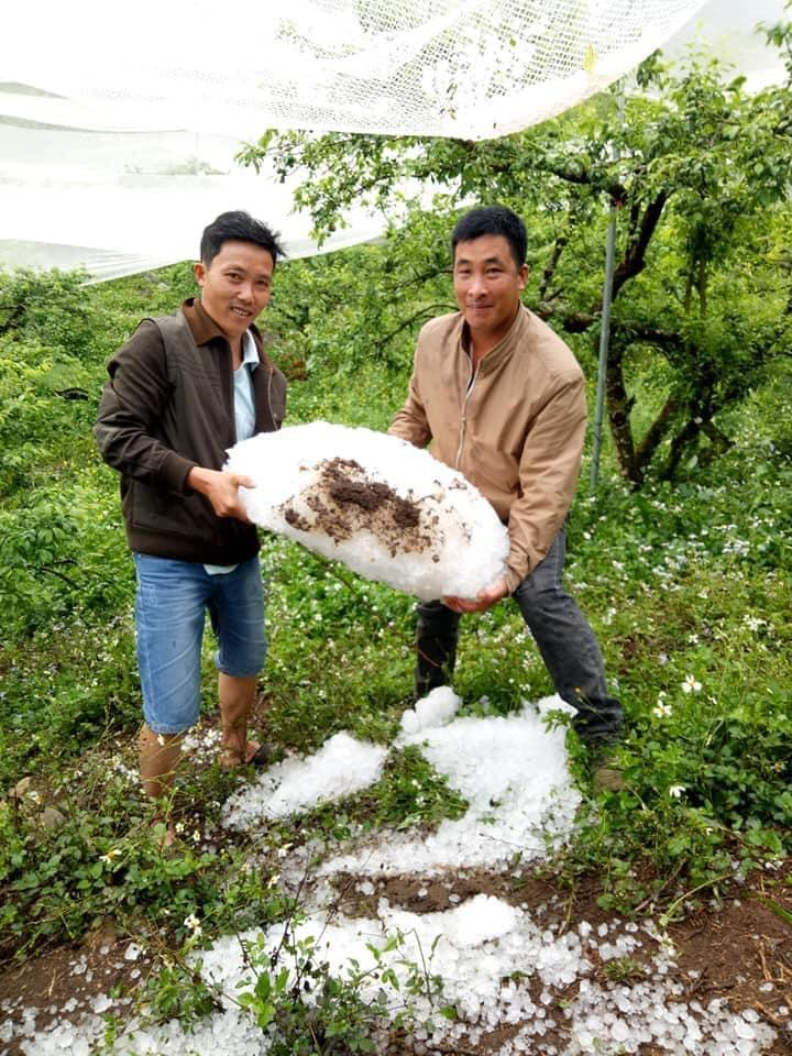 Sơn La: mưa đá làm thiệt hại hơn 200 ha hoa màu ảnh 1