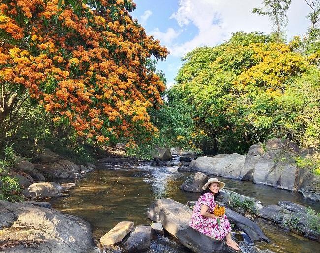 Hoa trang rừng rực rỡ khoe sắc 2 bên bờ suối Tà Má, Bình Định ảnh 2