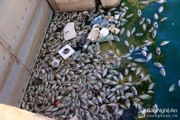 Nghệ An: Hàng loạt hồ điều hoà ô nhiễm nặng ảnh 1