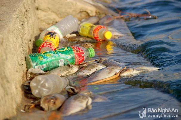 Nghệ An: Hàng loạt hồ điều hoà ô nhiễm nặng ảnh 2