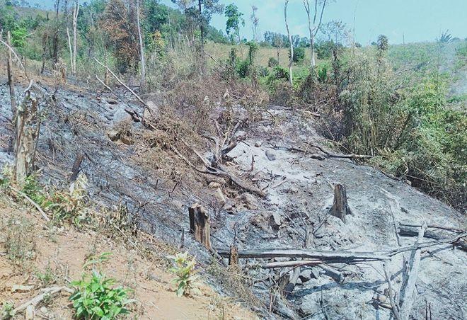 Rừng Tây Nguyên tiếp tục bị tàn phá ảnh 2