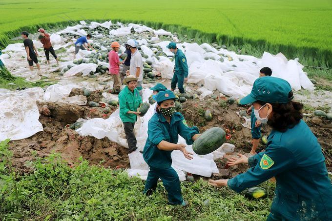 Người dân giúp tài xế thu gom 20 tấn dưa hấu đổ xuống ruộng ảnh 2
