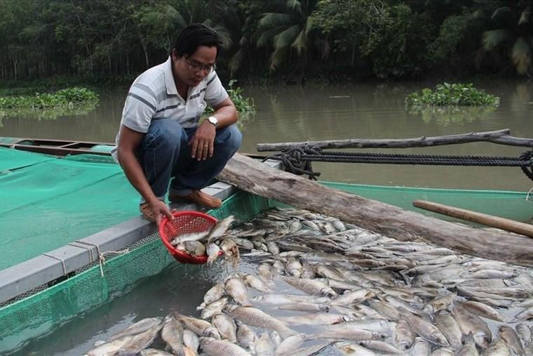 Hàng chục tấn cá chết trắng sông Sài Gòn sau trận mưa lớn ảnh 2