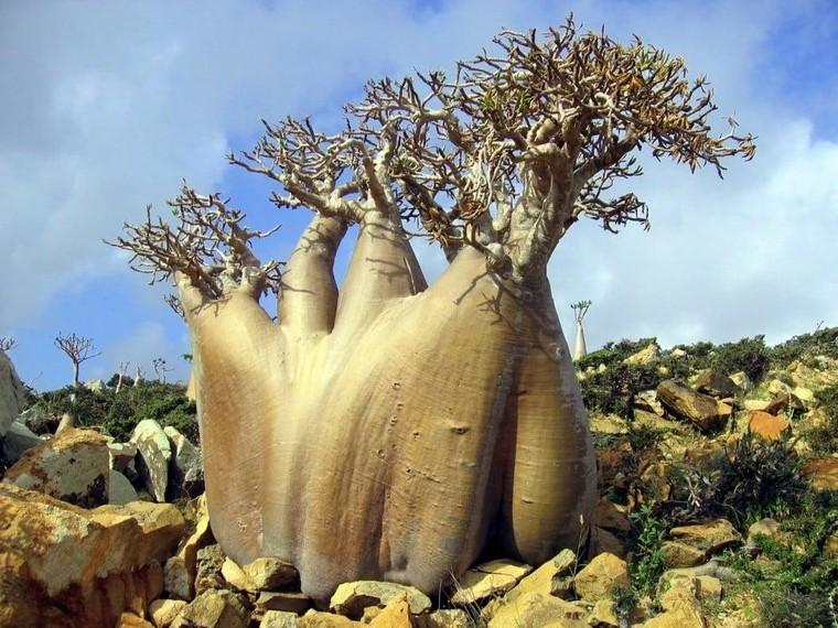 Quần đảo Socotra với hơn 700 loài đặc hữu ảnh 3