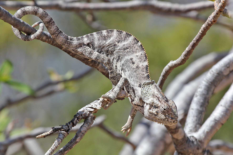 Quần đảo Socotra với hơn 700 loài đặc hữu ảnh 2
