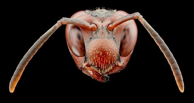 Ong bắp cày có gen nhận diện khuôn mặt ảnh 1