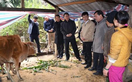 Yên Bái: Hàng loạt gia súc chết rét khiến người dân mất tiền tỷ ảnh 1