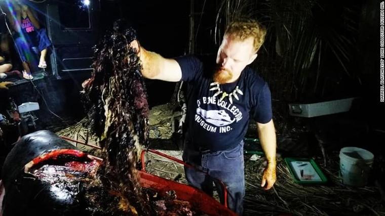 Tìm thấy 40kg túi nylon trong xác cá voi ảnh 1