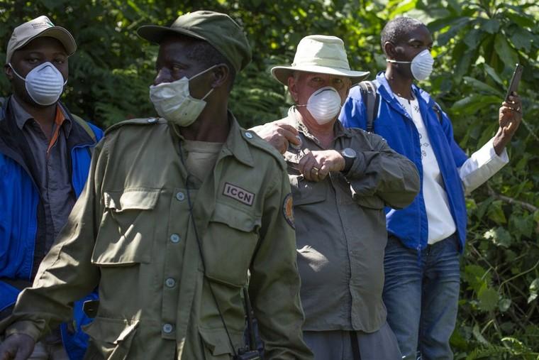 Dịch Covid-19 đe dọa loài khỉ đột châu Phi ảnh 1