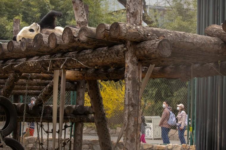Các điểm du lịch Bắc Kinh 'rụt rè' mở cửa trở lại ảnh 11