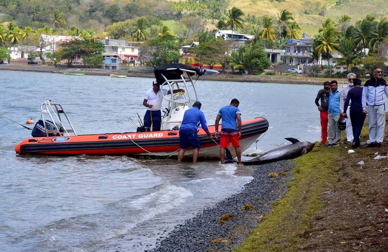 Ngư dân Mauritius nỗ lực cứu cá heo sau sự cố tràn dầu ảnh 1