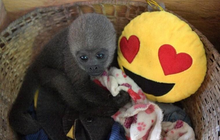 Khu bảo tồn khỉ mồ côi trong rừng Amazon ảnh 2