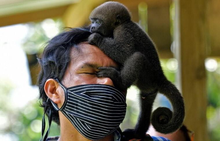 Khu bảo tồn khỉ mồ côi trong rừng Amazon ảnh 1