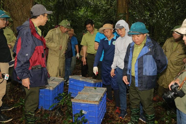 Tái thả 92 động vật hoang dã tại Vườn quốc gia Cúc Phương ảnh 2