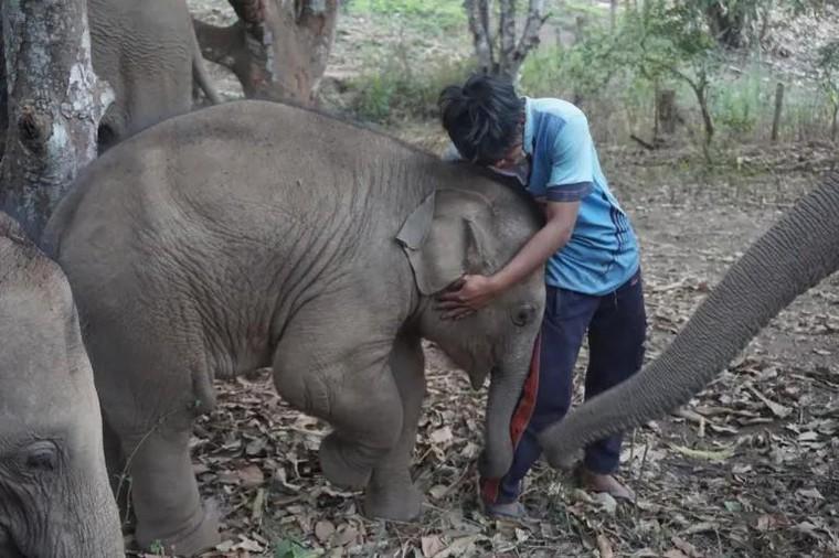 Tương lai nào cho những chú voi 'thất nghiệp'? ảnh 2