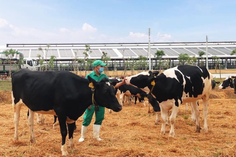 Vinamilk thăng 6 hạng trong Top 50 công ty sữa lớn nhất thế giới ảnh 2