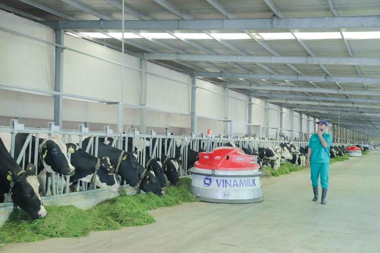 Vinamilk liên tục dẫn đầu ngành hàng sữa nước nhiều năm liền ảnh 2
