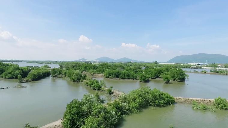 Mạng xã hội bỗng chốc 'xanh rì' với chiến dịch 'Triệu cây vươn cao cho Việt Nam xanh' ảnh 3
