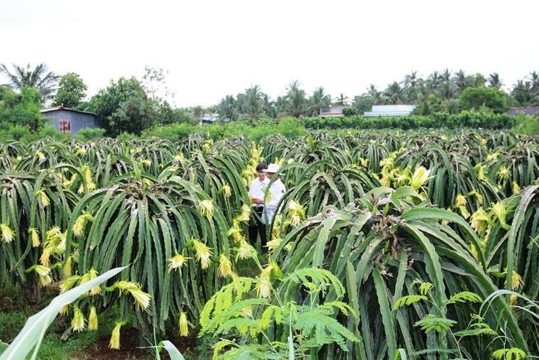 70 năm Ngân hàng Việt Nam: Agribank tự hào góp thêm trang sử vẻ vang! ảnh 1
