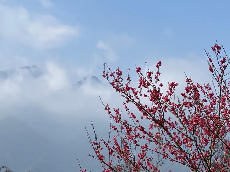 Du khách nô nức check-in thiên đường hoa Sa Pa đầu xuân ảnh 6