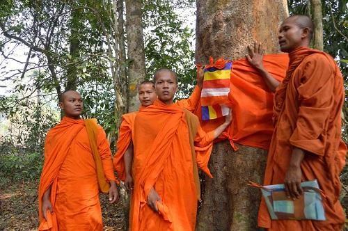 Các nhà Sư tổ chức quy y cho cây cổ thụ bảo vệ rừng ở Campuchia
