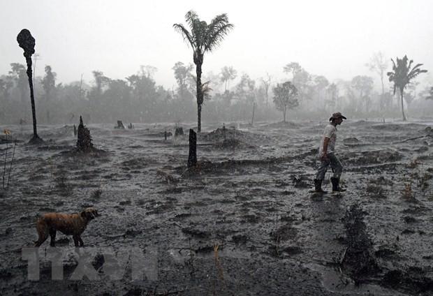 Khu vực rừng Amazon bị phá hủy do hỏa hoạn ở gần Porto Velho, bang Rondonia, Brazil ngày 26/8/2019. (Nguồn: AFP/TTXVN)