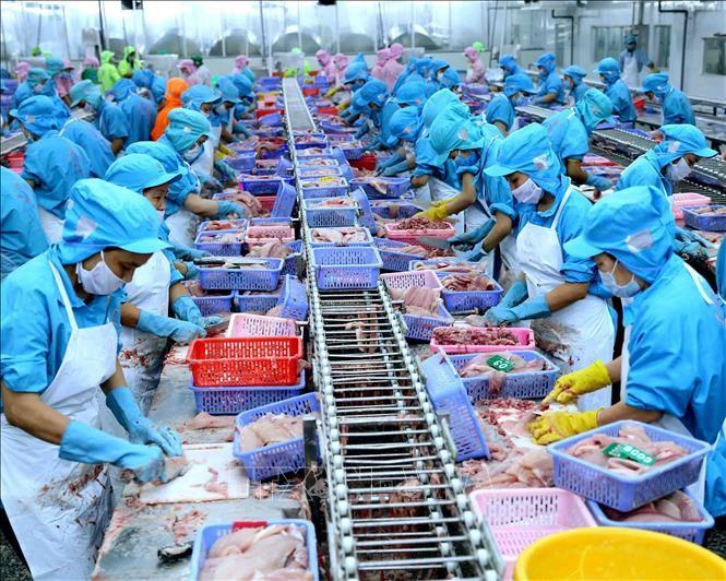 Chế biến cá tra xuất khẩu tại nhà máy của Công ty TNHH Công nghiệp Thủy sản miền Nam (TP Cần Thơ). Ảnh tư liệu: Vũ Sinh/TTXVN.