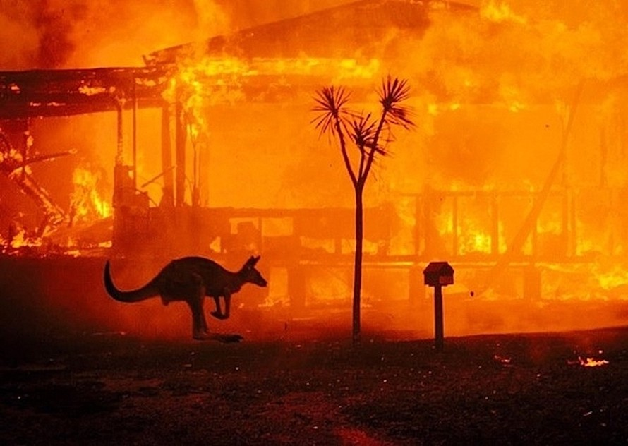 Khoảng 480 triệu động vật có vú cùng các loài chim và bò sát đã bị thiêu cháy trong các vụ cháy rừng trên khắp nước Australia