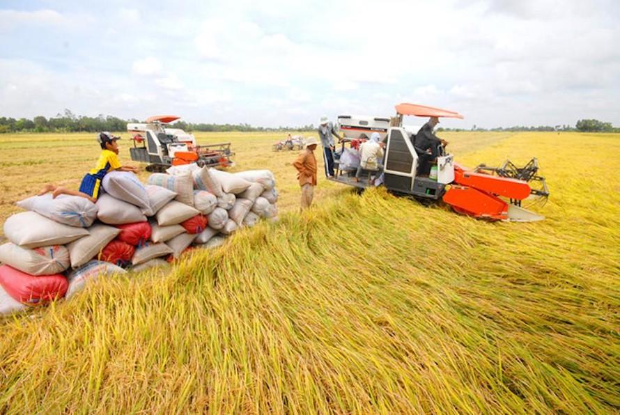 Đảm bảo vốn tín dụng phục vụ thu mua, tạm trữ thóc, gạo tại khu vực ĐBSCL