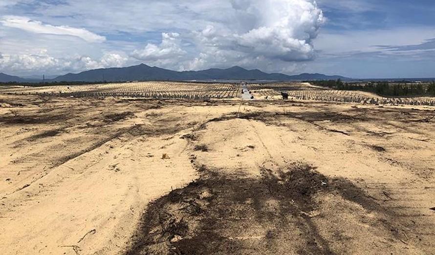 Bình Định: Điều tra, xử lý vụ phá 5,26 ha rừng phòng hộ ven biển