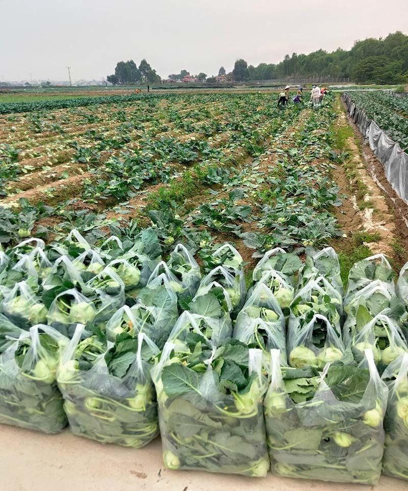 Bộ Công Thương tháo gỡ khó khăn, thúc đẩy tiêu thụ nông sản do ảnh hưởng của dịch bệnh COVID-19