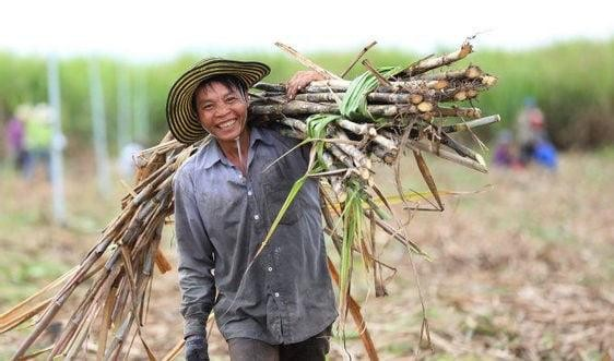 Việt Nam chính thức áp thuế chống bán phá lên 47,64% với đường nhập từ Thái Lan.