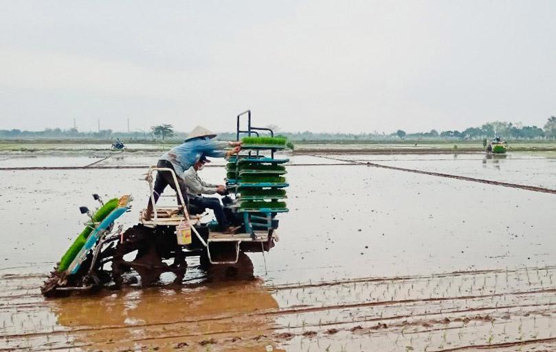 Nông dân xã Nam Triều (huyện Phú Xuyên) áp dụng mạ khay, cấy máy để đẩy nhanh tiến độ sản xuất vụ xuân 2021. (Ảnh: Hà Nội mới)