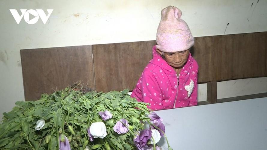 Bà Lầu Thị Mỷ cùng số cây thuốc phiện đã được nhổ bỏ