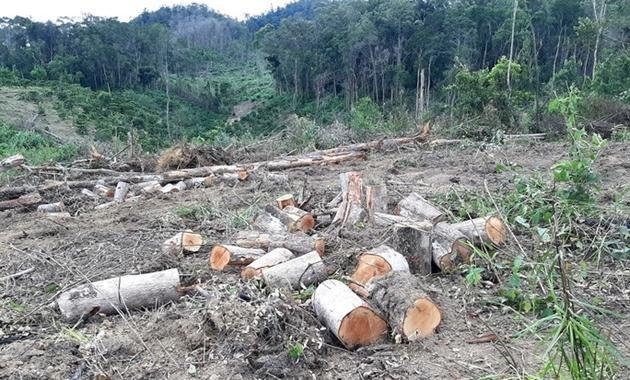 Hiện trường một vụ phá rừng lớn ở Lâm Đồng vào tháng 6/2020. (Ảnh: Công Luận)