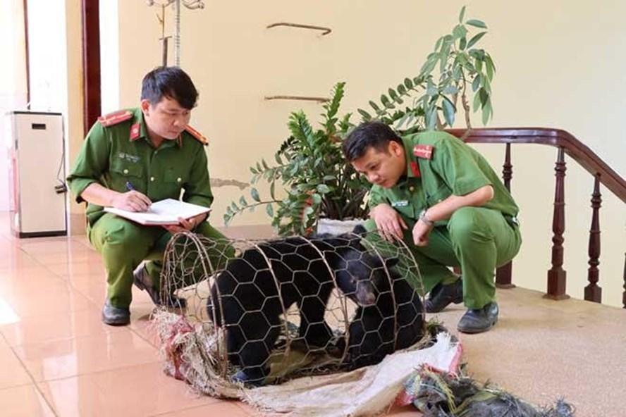 Hai cá thể gấu ngựa được cơ quan chức năng tỉnh Lai Châu giải cứu khi đang chuẩn bị bị giao dịch. (Ảnh: Lao Động)