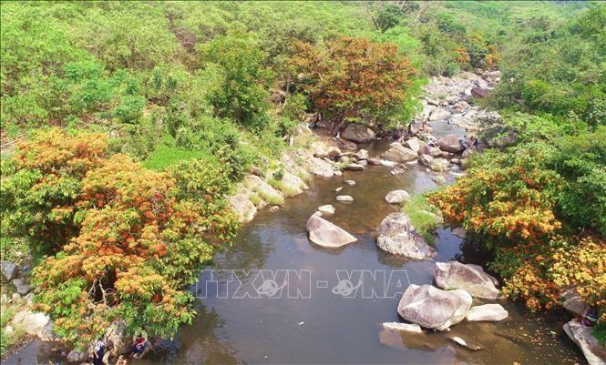 Hàng cây trang rừng mọc hai bên bờ suối Tà Má. (Ảnh: TTXVN)