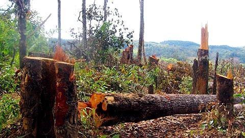 Một khu rừng ở huyện Kbang (Gia Lai) đang bị tàn phá. (Ảnh: Nhân Dân)