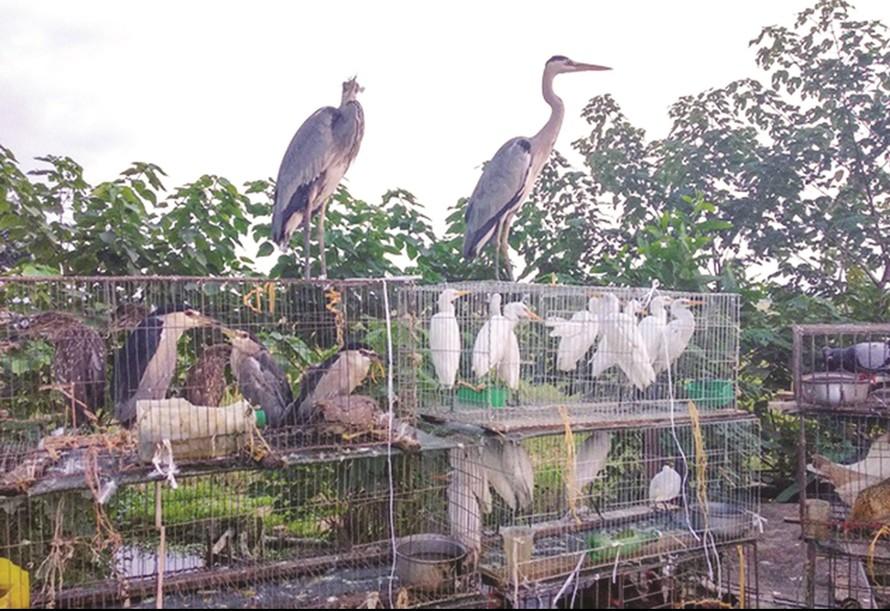 Chợ chim thiên nhiên được bày bán công khai trên đại lộ Thăng Long (Hà Nội). (Ảnh: Báo Dân tộc)