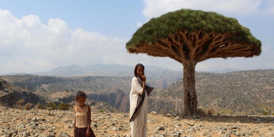 Quần đảo Socotra với hơn 700 loài đặc hữu