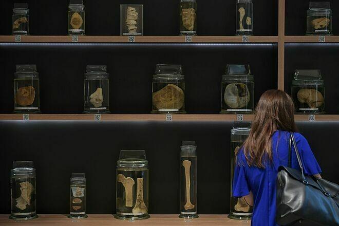 Mẫu vật não người lưu trữ tại Trung tâm tài nguyên giải phẫu, Trường Y khoa Lee Kong Chian. Ảnh: Straits Times