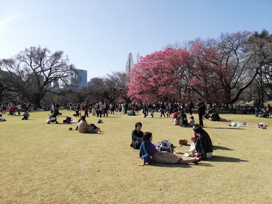Thư Tokyo: Dịch bệnh xám xịt, anh đào vẫn thắm!