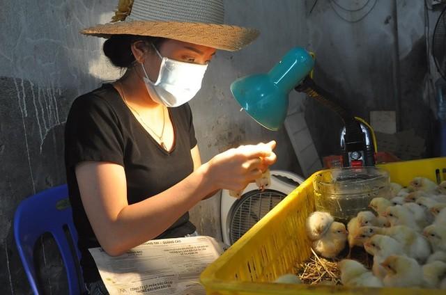 Thợ soi lỗ huyệt gà sẽ có thu nhập từ 1-2 triệu đồng/ ngày, tùy thuộc vào tay nghề và số lượng gà được chọn.