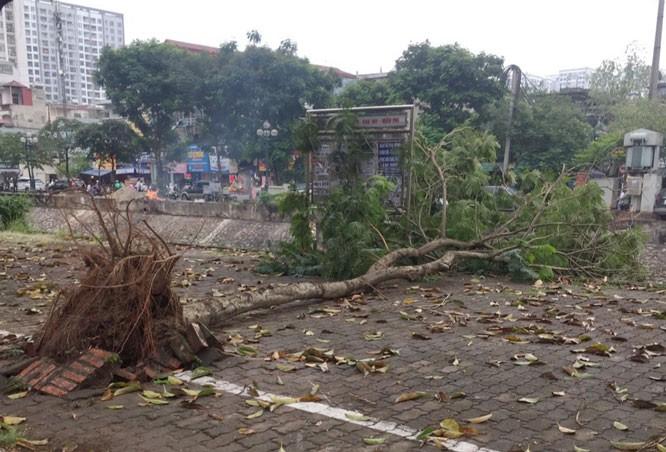 Cây đổ tại đường Tam Trinh.