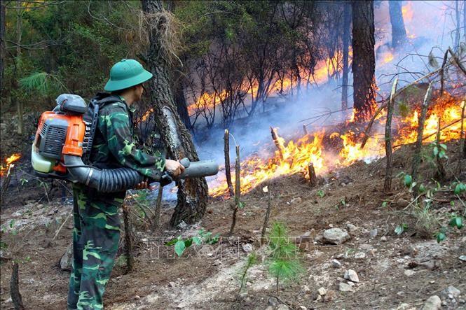 Các lực lượng chức năng nỗ lực dập lửa tại xã Diễn Lợi, huyện Diễn Châu (Nghệ An) sáng 28/6. Ảnh: Tá Chuyên/TTXVN