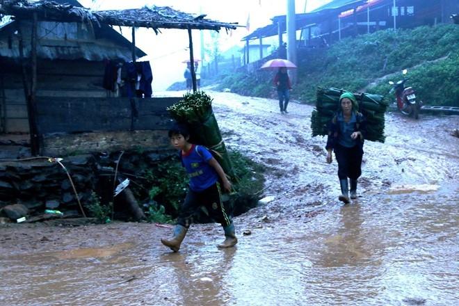 Người dân xã Nậm Càn đi hái lá dong rừng về bán cho thương lái.