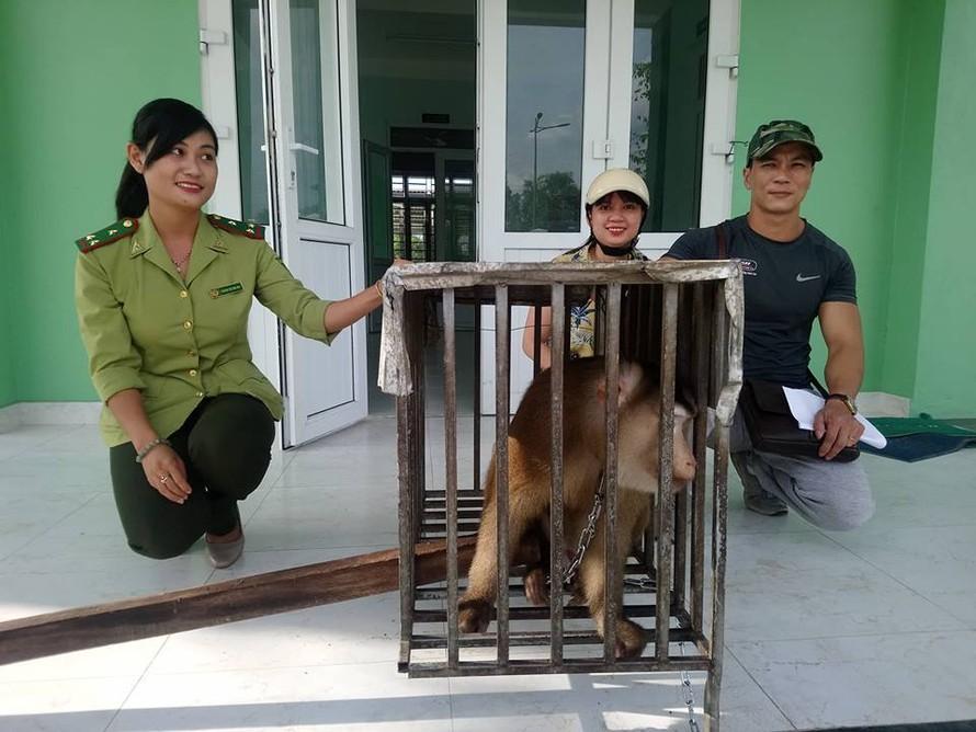 Hạt Kiểm lâm TP.Huế tiếp nhận cá thể khỉ đuôi lợn. Ảnh: Dân Việt